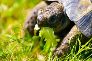 tortoise, Jessica Grant, CanLit